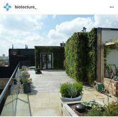 Flower Wall, Wall Flowers, Outdoor Spaces, Outdoor Decor, Rooftop Garden, Irrigation, Trellis, Balcony, Roof Terraces