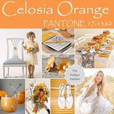 Celosia Orange palette http://www.theperfectpalette.com/2013/11/top-10-pantone-colors-for-spring-2014.html