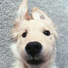 My guilty pleasure is definitely googling puppies
