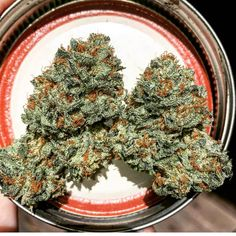 Get High With Me where is marijuana legal in the us, colorado marijuana dispensaries, california medical marijuana, medical marijuana inc, california marijuana, buy marijuana seeds, marijuana in texas, colorado marijuana prices, when to harvest marijuana, florida marijuana legalization. Visit http://plantingpot.com the source for all thing marijuana. We show you how to be successful when you are planting pot!