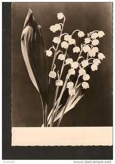 5k. Germany, FLORA flower LILY of the valley / may-lily - real photo - DDR 1961 - 1962