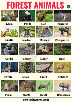 Forest Animals List, Animals Name List, Wild Animals List, Animals Name In English, Types Of Animals, Animals Of The World, Birds Pictures With Names, Animal Pictures For Kids, Bird Pictures