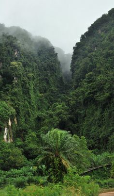 #green #rainforest Walking through the Thick, you would see a lot of green. Beware the things with bright colors.