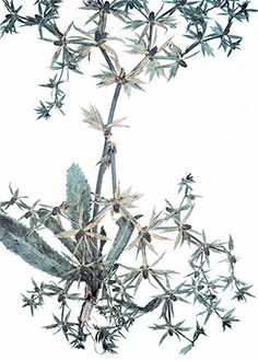 Pressed flower herbarium specimen photograph by Nick Knight