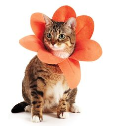 Make your cat a flower petal costume for spring!