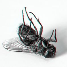dead fly. 3d stereoscopic image