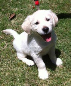 Bruce: Golden Puppy is so happy. So, so happy.