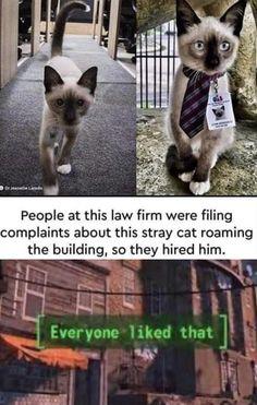 Funny Animal Jokes, Cute Funny Animals, Animal Memes, Cute Baby Animals, Funny Cute, Haha Funny, Cute Cats, Animal Humour, Hilarious