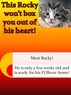Meet Rocky