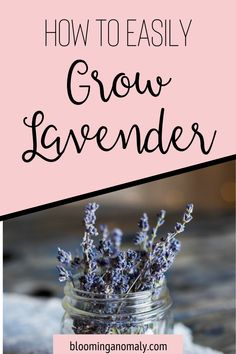 Lavender is a popular herb with many uses. Learn to grow your own so you can make beauty and health products at home. Click on the pin to learn about how to easily grow lavender in your garden. #lavender #lavenderplant #lavenderherb #howtogrowlavender Lavender Uses, Growing Lavender, Gardening For Beginners, Gardening Tips, Urban Garden Design, Garden Posts, Make Beauty, Health Products, Container Gardening