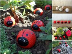 Creative Ideas - DIY Cute Golf Ball Ladybugs