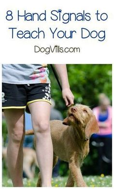 Looking for new dog training tips & tricks? Check out 8 hand signals to teach your dog! #dogtraining #dogtrickstraining