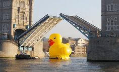 Duck's progress: A giant 50 foot rubber duck floats down the Thames under Tower Bridge