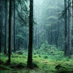 Ontdek  één van Zweden's oudste en meest ongerepte bossen nabij Stockholm met deze begeleiden hike. Te boeken op AdventureTickets.nl