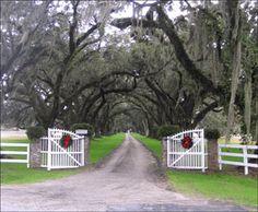 Tomotley Plantation Avenue of Oaks 2005 - Beaufort County, South Carolina