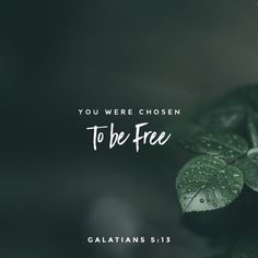Whom the Son sets free, is free indeed!!