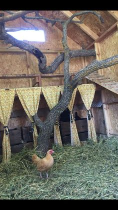 Oak branches for the girls to perch on in their custom coop! Oak branches for the girls to perch on in their custom coop! Chicken Garden, Backyard Chicken Coops, Chicken Coop Plans, Building A Chicken Coop, Diy Chicken Coop, Chickens Backyard, Chicken Coup, Chicken Lady, Chicken Runs