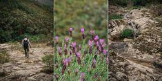 Trilho das Cascatas - Viagens à Solta Country Roads, Plants, Art, Pedestrian, Waterfalls, Drop, Walking, Railings, Places