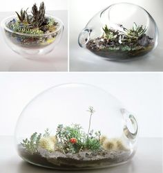 Glass terrariums: The retro trend is back to stay!