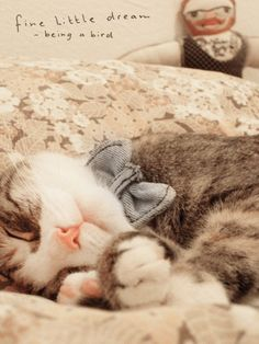 Lovely cats ~~ Share the Cute Cats to Make you Smile. Have a Nice Day! Enjoy and share with your fans! #cat #oohpet