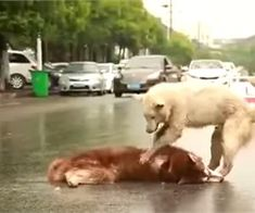 What Happened Next Shocked Animal Lovers