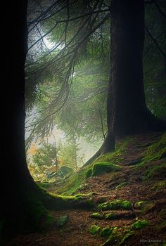 Find images and videos about nature, forest and Darkness on We Heart It - the app to get lost in what you love. Beautiful World, Beautiful Places, Beautiful Forest, Beautiful Pictures, Walk In The Woods, Tree Forest, Forest Light, Forest View, Forest Path