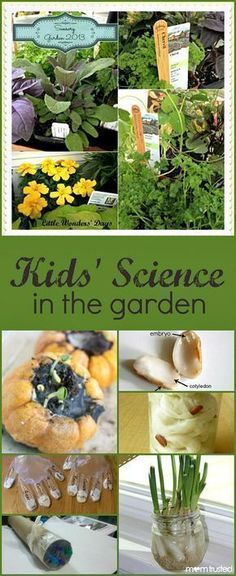 Add a little science fun to your gardening with these simple experiments and science activities for kids.