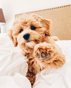 Source by jsimmrow dog dog memes dog videos videos wallpaper dog memes dog quotes dogs dogs pictures dogs videos puppies puppy video Super Cute Puppies, Baby Animals Super Cute, Cute Baby Dogs, Cute Little Puppies, Cute Dogs And Puppies, Cute Little Animals, Cute Funny Animals, Doggies, Cute Pups