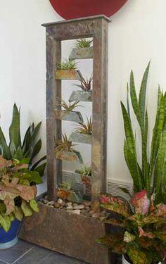 Tillandsia Bromeliads, or Air Plants, in a fountain...fun!