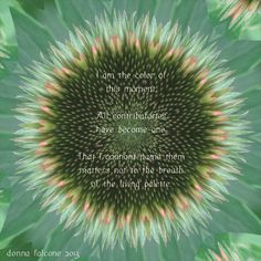 November 2013 Lyme Artist of The Month Donna Falcone. Read her encouraging story and beautiful poetry! #Lyme #Artist #Photography #Poetry #Quotes