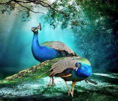 "angel-kiyoss:  ""Beautiful birds…  """