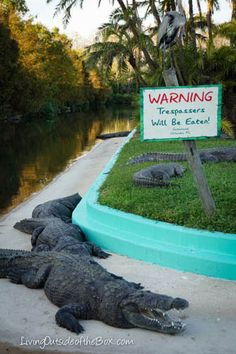Gatorland Park in Orlando-Gator breeding, shows, wrestling, petting Zoo, and a zip line over the Gator Swamps #FL