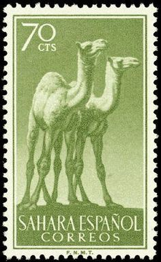 1957: Dromedary (Camelus dromedarius) (ספרד, מושבות) (Spanish Sahara) Mi:ES-SH 167,Sn:ES-SH 84,Yt:ES-SH 123,Edi:ES-SH 136