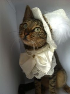 It my kitty were coming to the wedding!  Pet Wedding Costume for the Groom by FiercePetFashion on Etsy