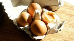 Mleczko i jajeczko
