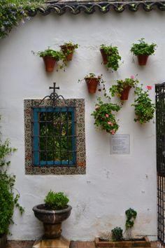 Jardineria Eladio Nonay: MACETAS CON UNA GRACIA ESPECIAL  (Jardinería Eladi...