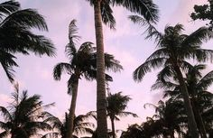 136 Likes, 9 Comments - Alexa Taiwan Travel, Pink Sunset, Sunsets, Palm, Purple, Pretty, Plants, Instagram, Plant