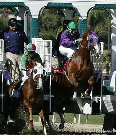 Breaking from the gate with energy! California Chrome.