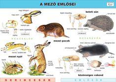A mező emlősei Toddler Preschool, Homeschool, Science, Teaching, Activities, Kids, Animals, Speech Language Therapy, Animales