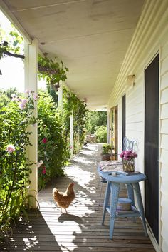 beautiful south: Chicken Coops
