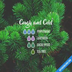 Cough and Cold - Essential Oil Diffuser Blend