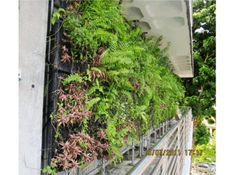 Green Wall | Ngee Ann Polytechnic?s Vertical Extensive Green Wall Testing  Facility