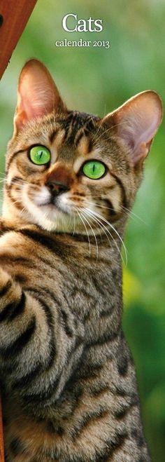 Katten Kalender Slimline 2013