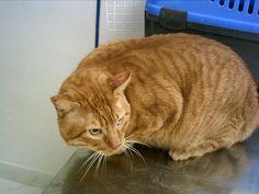 10 razones para adoptar un gato adulto | Cuidar de tu mascota es facilisimo.com