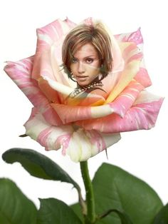 Create your own photo montage Rose on Pixiz. Thank You Messages For Birthday, Happy Birthday Wishes Photos, Tech Hacks, Lily, Photo Montage, Reading, Create, Fabric, Outfits
