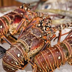 From terrific golfing to native lobster, here's why a trip to these islands should be on your bucket list. ...