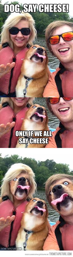 Hilarious animal pictures are a great way to brighten up your day. Everyone loves funny animal photos, and who can blame them? Come and have a laugh. Super Funny, Really Funny, Funny Cute, The Funny, Funny Dogs, Funny Animals, Cute Animals, Humor Animal, Funny Face Swap