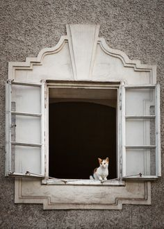 ᕈųяяʄᏋᏣɬ Ꮭ♡ⱴɛ (Cat in Window - Salzburg by James Cuthbert) Crazy Cat Lady, Crazy Cats, I Love Cats, Cool Cats, Cat Window, Window View, Open Window, Looking Out The Window, Windows