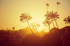 LAGUNA BEACH - Navis Photography