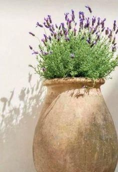 Milieu Magazine by our dear friend Pam Pierce Garden Urns, Garden Plants, Small Gardens, Outdoor Gardens, Olive Jar, Spanish Garden, Garden Inspiration, Container Gardening, Flower Pots